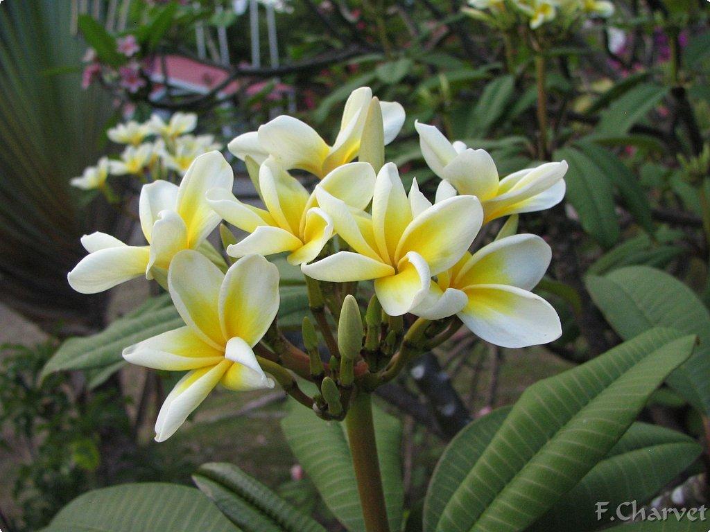 Les fleurs et les plantes for Catalogue fleurs et plantes